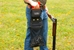 Wild Hare Trap Shooter's Combo - WH-309S-BK